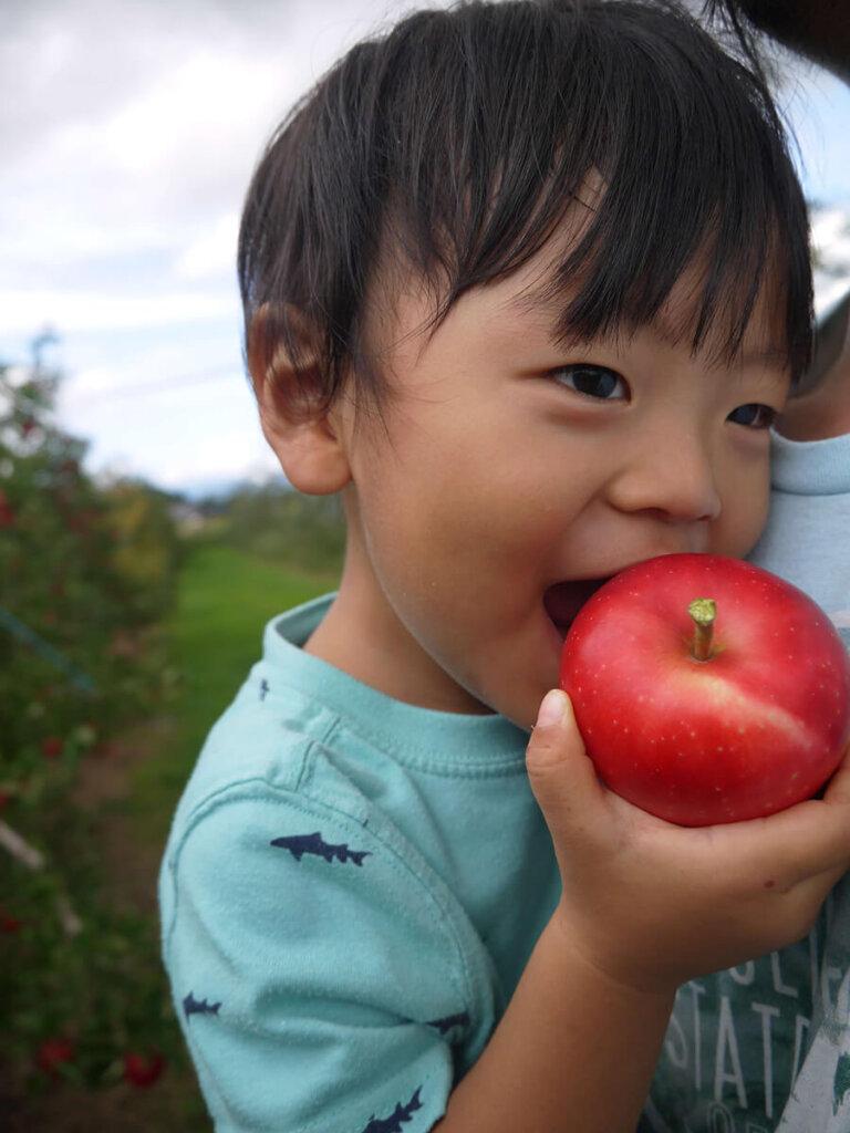 平林農園 りんご狩り 丸かじり