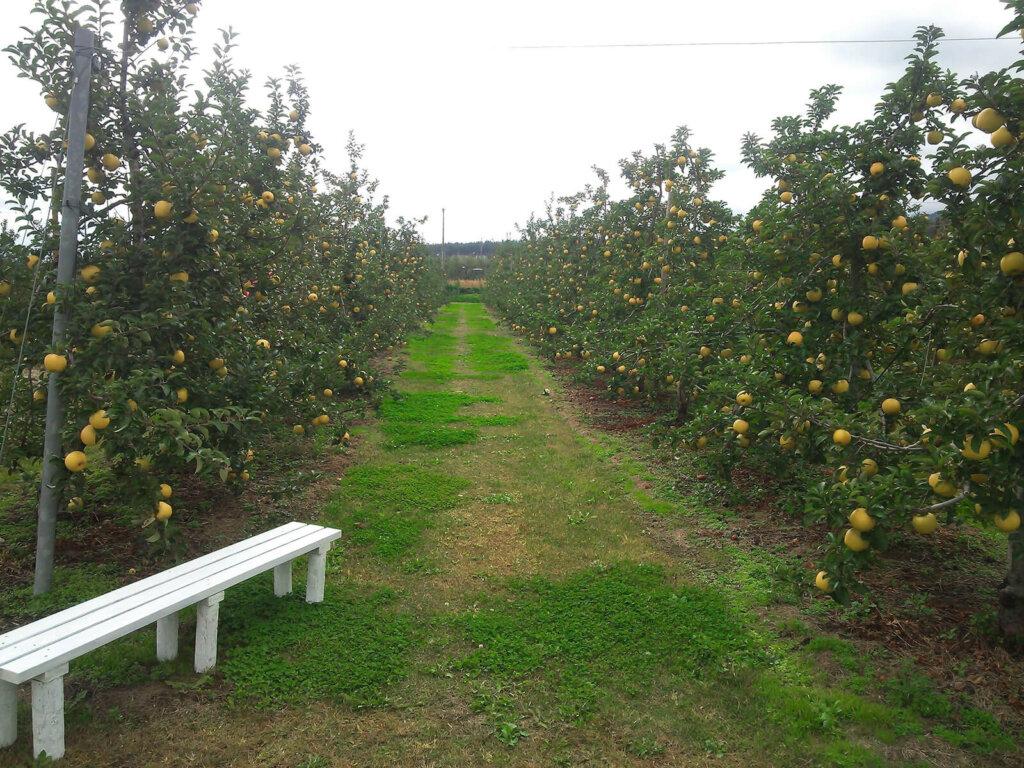 平林農園 りんご狩り